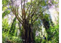 Tiêu chuẩn toàn cầu về các giải pháp dựa vào thiên nhiên